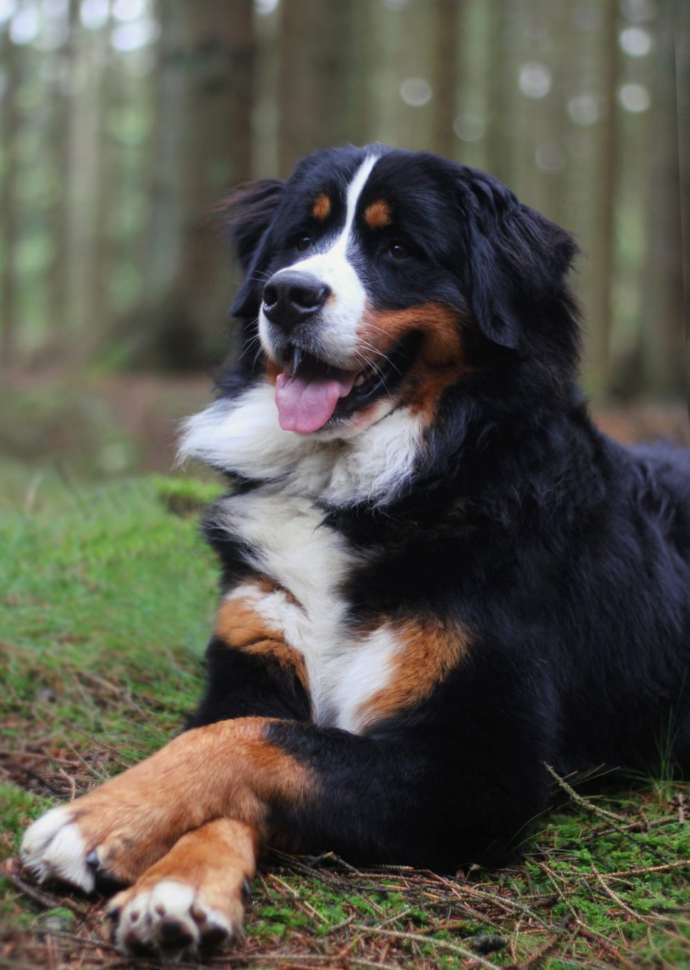 Kontorhunden Marlie